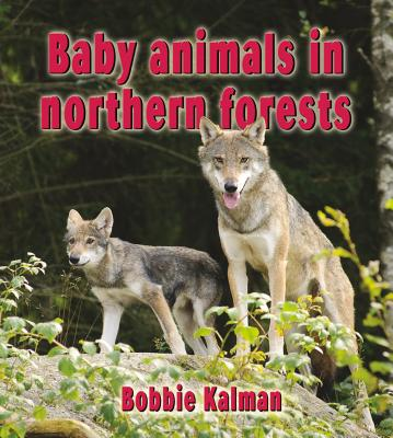 Baby Animals in Northern Forests By Kalman, Bobbie